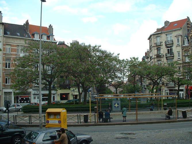 Paulownia impérial – Etterbeek, Place Saint-Antoine –  21 Mai 2003