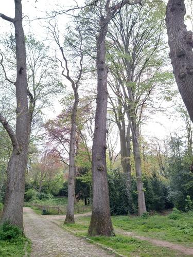 Châtaignier – Forest, Parc Jacques Brel, parc –  30 Avril 2021