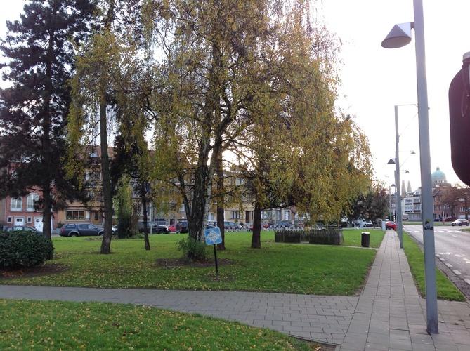 Saule pleureur – Ganshoren, Square du Centenaire, Square du Centenaire –  06 Décembre 2013