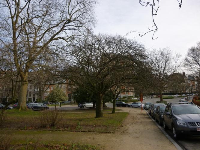 Cerisier du Japon – Ixelles, Etangs d'Ixelles –  07 Janvier 2014