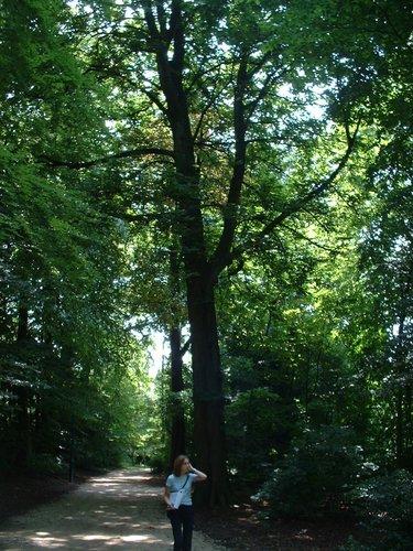 Marronnier commun – Jette, Parc Roi Baudouin phase 1, parc –  15 Juillet 2005