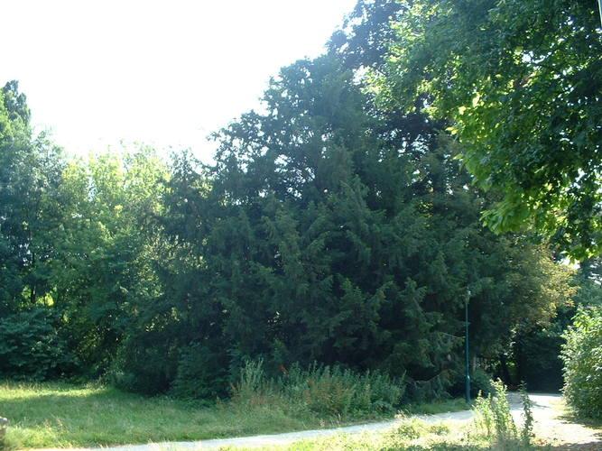 If commun – Jette, Parc Roi Baudouin phase 1, parc –  15 Juillet 2005