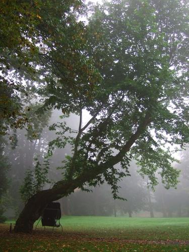 Platane d'Orient – Jette, Parc Titeca, Drève de Dieleghem, 79 –  08 Octobre 2007