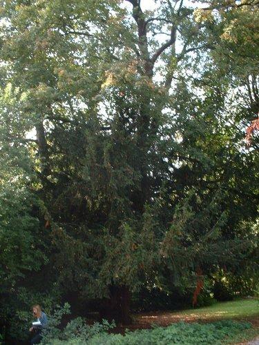 If commun – Jette, Parc du Sacré-Cœur de Jette, Avenue du Sacré-Coeur –  22 Septembre 2003