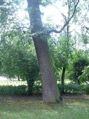Tamme kastanje – Jette, Park van de Sans Souci kliniek, Wereldtentoonstellingslaan, 218 –  20 August 2004