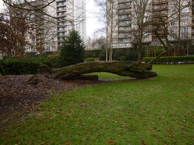 Charme commun – Molenbeek-Saint-Jean, Parc Marie José, parc –  05 Février 2015