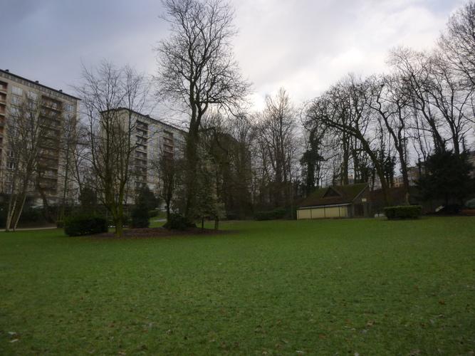 Frêne commun – Molenbeek-Saint-Jean, Parc Marie José, parc –  05 Février 2015