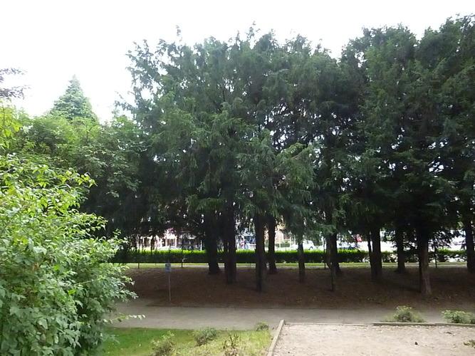 If commun – Molenbeek-Saint-Jean, Parc des Muses, parc –  05 Août 2013
