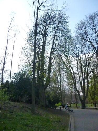 Marronnier commun – Schaerbeek, Parc Josaphat –  25 Mars 2014