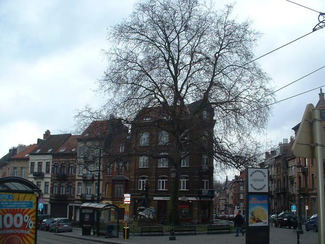 Platane à feuille d'érable<br>Schaerbeek Chaussée de Haecht