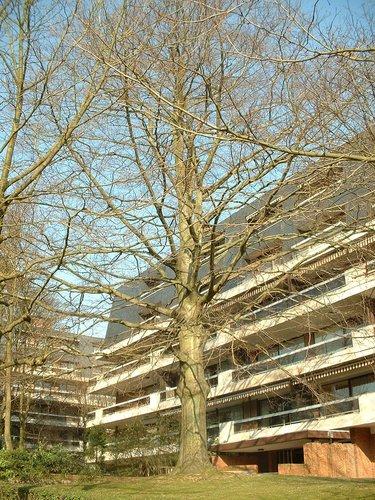 Rode beuk – Ukkel, Kasteel de Walzinlaan, 11 –  21 February 2003