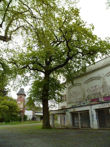 Chêne pédonculé – Uccle, Hippodrome de Boitsfort –  08 Mai 2012