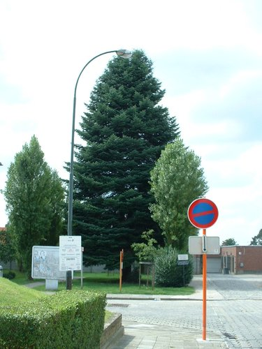 Reuze zilverspar – Oudergem, Emile Rotiersstraat –  02 August 2005