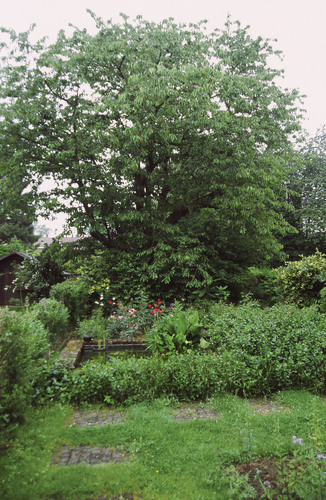 Merisier – Auderghem, Avenue Charles Schaller, 67 –  10 Mai 2003