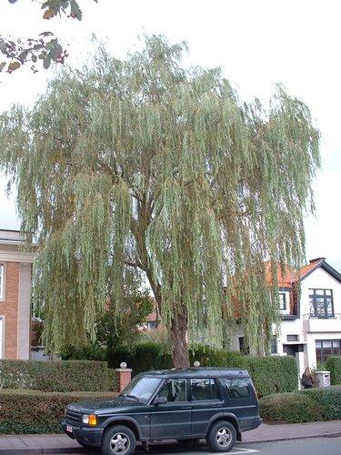 Treurwilg – St.- Pieters - Woluwe, Grootveldlaan, 320 –  17 Oktober 2002