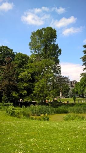 Moerascipres – Ukkel, Wolvendaelpark –  25 Mei 2016
