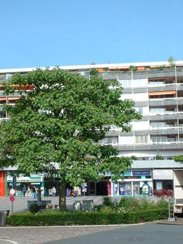 Paulownia impérial – Watermael-Boitsfort, Place Eugène Keym –  17 Juillet 2002