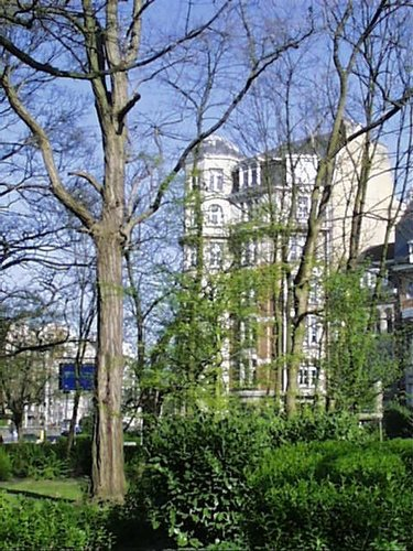 Gewone acacia – Schaarbeek, Vergote square, Vergotesquare, face 22 –  05 April 2002