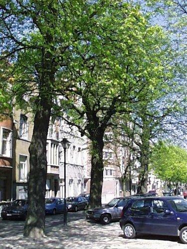 Witte paardenkastanje – Schaarbeek, de Jamblinne de Meuxplein, de Jamblinne de Meuxplein, face 26 –  05 April 2002