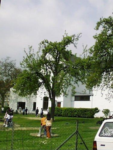 Poirier cultivé – Woluwé-Saint-Lambert, Avenue Georges Henri, 251b –  23 Avril 2002