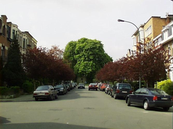 Marronnier commun – Woluwé-Saint-Lambert, Square Marie-José, Avenue Marie-José –  23 Avril 2002