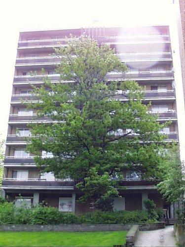 Erable sycomore – Saint-Josse-Ten-Noode, Rue de la Poste, 51 –  02 Mai 2002