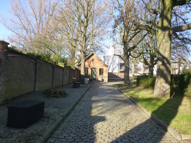 Witte paardenkastanje – Brussel, Begraafplaats van Neder-over-Heembeek, Frans Vekemansstraat –  02 December 2015