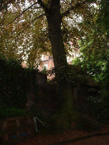 Hêtre pourpre – Saint-Josse-Ten-Noode, Rue de la Limite, 116 –  14 Mai 2002
