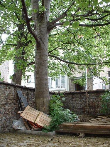 Erable sycomore – Saint-Josse-Ten-Noode, Rue Potagère, 132 –  14 Mai 2002