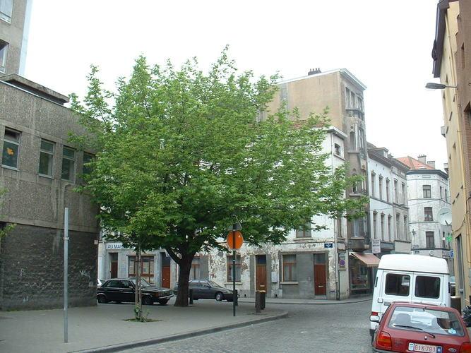 Ptérocaryer à feuilles de frêne – Bruxelles, Rue du Vautour –  08 Mai 2002