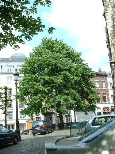 Noisetier de Byzance – Bruxelles, Place du Grand Sablon –  15 Mai 2002