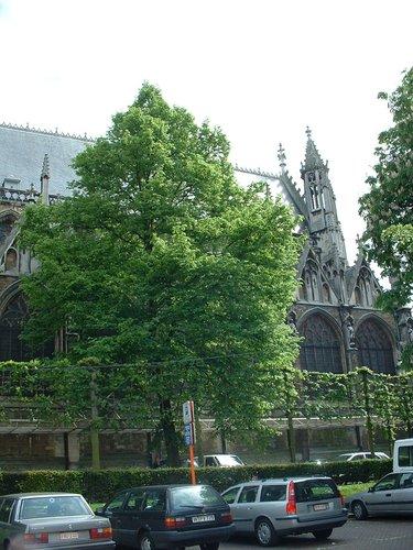 Tilleul du Caucase – Bruxelles, Place du Grand Sablon –  15 Mai 2002