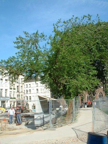 Mûrier blanc<br>Bruxelles Rue de la Madeleine