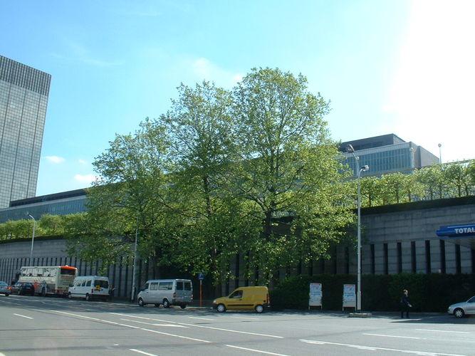 Gewone plataan – Brussel, Pachecolaan, 32 –  16 Mei 2002