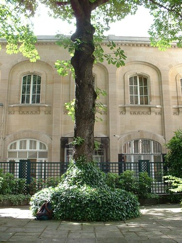 Marronnier commun – Bruxelles, Rue Ducale, 65 –  29 Mai 2002