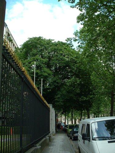 Marronnier commun – Bruxelles, Boulevard du Régent, 47 –  28 Mai 2002