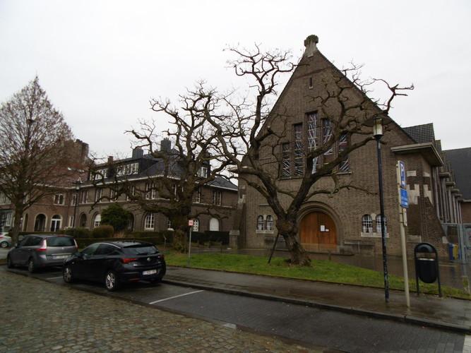 Robinia pseudoacacia var. inermis – Schaerbeek, Avenue de Roodebeek –  15 Mars 2018