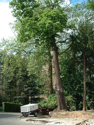 Châtaignier – Schaerbeek, Rue Frédéric Pelletier, 37 –  31 Mai 2002