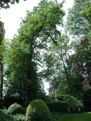 Zoete kers – Schaarbeek, de Jamblinne de Meuxplein, 14 –  31 Mei 2002