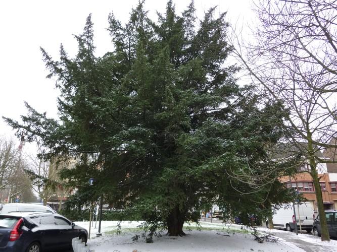 If commun – Schaerbeek, Square Eugène Plasky –  11 Février 2013