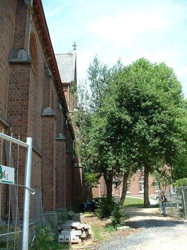 houx – Bruxelles, Jardin de l'église des Dominicains, Avenue de la Renaissance, 40 –  19 Juin 2002