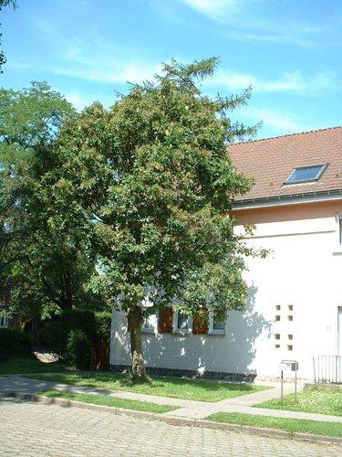 Pluimes – Evere, Tornooiveld wijk, Schildlaan –  17 Juni 2002