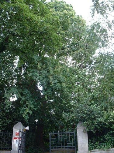 Tamme kastanje – St.- Lambrechts - Woluwe, Dennenboslaan, 58 –  27 Juni 2002