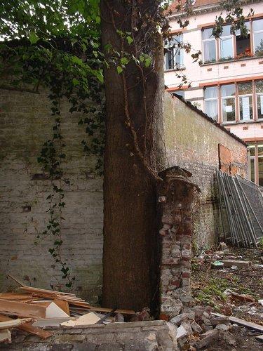 Erable sycomore – Schaerbeek, Rue de la Poste, 147 –  09 Juillet 2002