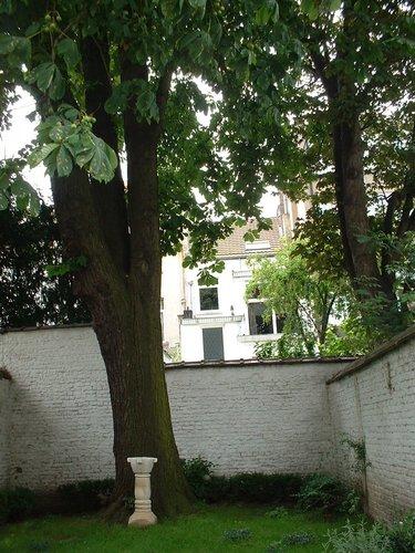 Marronnier commun – Schaerbeek, Rue de Locht, 47 –  09 Juillet 2002