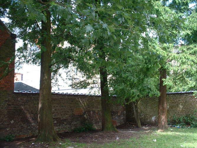 Métaséquoia – Schaerbeek, Rue du Tilleul, 52 –  11 Juillet 2002