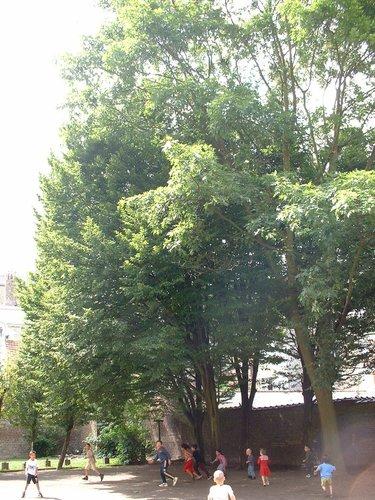 Charme commun – Schaerbeek, Rue du Tilleul, 52 –  11 Juillet 2002
