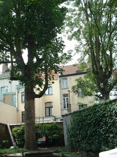 Erable sycomore – Schaerbeek, Rue Floris, 45 –  12 Juillet 2002