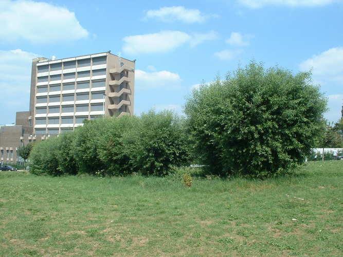 Saule blanc – Berchem-Sainte-Agathe, Hunderenveld, Hunderenveld –  20 Août 2003
