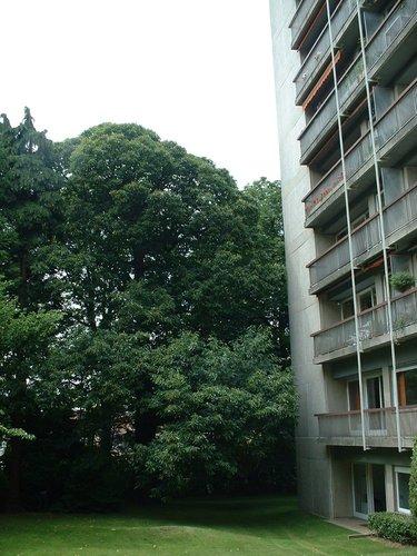 Châtaignier – Watermael-Boitsfort, Avenue Emile Van Becelaere, 28 –  25 Juillet 2002